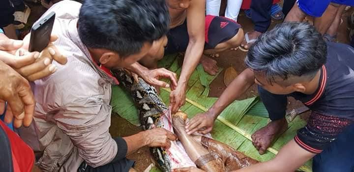 ular phyton 2